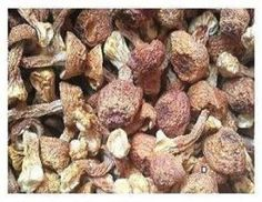 1 Pound (454 grams)House Dried Agaricus Blazei Premium Grade from Yunnan China  #JOHNLEEMUSHROOMRESELLER