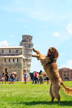 The Leaning Tower of Pisa is a hugely popular tourist site; people love taking forced perspective photos. See funny Leaning Tower of Pisa pictures here. Cute Funny Animals, Funny Cute, Funny Dogs, Funny Memes, That's Hilarious, Funniest Memes, Crazy Funny, Funny Tweets, Videos Funny