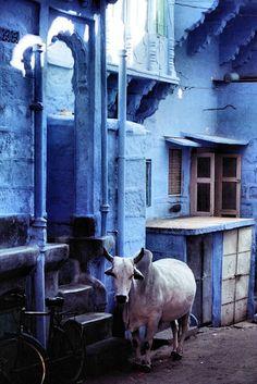 Street scene, Jodhpur, Rajasthan, India.