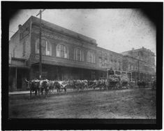 13. A team of oxen pull a carriage carrying supplies through Brookhaven. Mississippi