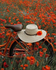 Bicycle in a field of poppies ♥ Nature Pictures, Beautiful Pictures, Wild Flowers, Beautiful Flowers, Bouquet Flowers, Plant Aesthetic, Bicycle Art, My Flower, Belle Photo