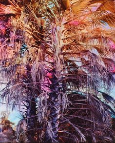 Swamp: Psychedelic photography series pops with an explosion of technicolour Photography Series, Unique Image, Great Shots, Textile Patterns, Textiles, Botanical Gardens, Psychedelic, Amazing Art, Fashion Art