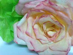 Rosa feita com filtro de café