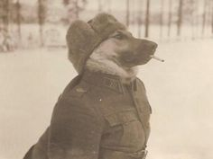 Finnish sergeant in Second World War. Many Finnish units were wiped out while licking their balls. Funny Animal Pictures, Dog Pictures, Funny Animals, Cute Animals, Happy Animals, War Dogs, Funny Dogs, Cute Dogs, Military Dogs
