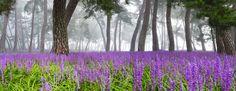 솔밭의 꽃향기 - null
