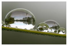 Landscapes in water droplets