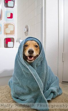 Bath time beagle  https://www.stonebridge.uk.com/course/dog-grooming-professional