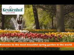 The world's largest flower garden Keukenhof is only open two months per year .Υou can see millions of tulips and other beautiful flowers. Beautiful Flowers, Most Beautiful, Spring Garden, Large Flowers, Worlds Largest, Tulips, Around The Worlds, Tulip