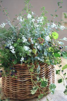 Pin on 寄せ植え Watercolor Flowers, Flower Arrangements, Beautiful Flowers, Floral Design, Basket, Garden, Nature, Ohana, Instagram