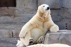 【画像GIF】シロクマに育てられたイッヌ、ガチで幸せそう