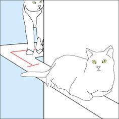 Make wall walkways wide enough to allow one cat to go around another.