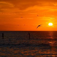 """""""Dwell on the beauty of life. Watch the stars and see yourself running with them.""""  Marcus Aurelius  _____  Paddle boarders enjoy the last rays of sunlight  _____ #ladyelliotisland #greatbarrierreef #southerngreatbarrierreef #visitfrasercoast #ocean #sunset #mermaid #mermaidlife #happiness #gratitude #waterlust #instagood #instadaily #ig_australia #queensland #visitqueensland #seeaustralia #love #nikon #nikonphotography #motivation #quote #quoteoftheday #naturephotography #landscape by…"""