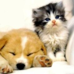 20 best cute kittens and puppies together images on pinterest