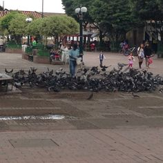 Thing 1, Four Square, Street View, Getting To Know, Parks, Santiago, Colombia
