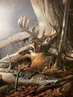 A Dixie Lady Deer Hunter: Good Morning Wildlife Paintings, Wildlife Art, Animal Paintings, Whitetail Deer Pictures, Deer Pics, Raul Gil, Animals Beautiful, Cute Animals, Deer Wallpaper