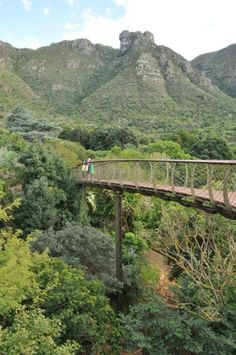 The Boomslang Treetop Walkway at Kirstenbosch Botanical Gardens Stuff To Do, Things To Do, Walkway, Cape Town, Botanical Gardens, South Africa, Westerns, In This Moment, Fantasy