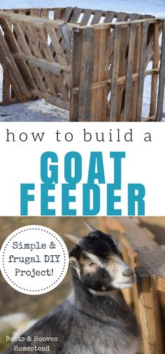 How to build a super simple and frugal goat feeder.