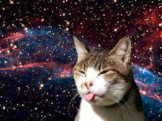 cats in space - Google Search