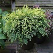 Top garden advice from Johnstown Garden Centre, Ireland's leading Garden Centre Johnstown Garden Centre, Evergreen, Herbs, Pots, Shop, Herb, Pottery, Cookware, Store