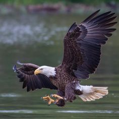 Striking Bird Photography by Adam Berry Eagle Images, Eagle Pictures, Bird Pictures, Animal Pictures, Pretty Birds, Beautiful Birds, Animals Beautiful, Exotic Birds, Colorful Birds