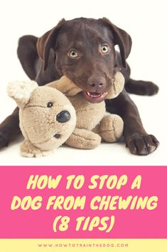 Is your dog chewing everything he comes across? Like all animals, dogs explore the environment and want to know more about it. Here are some tips on how to stop a dog from chewing items he shouldn't Puppy Training Schedule, Dog Training School, Dog Training Methods, Dog Training Classes, Training Your Puppy, Training Online, Training Dogs, Easiest Dogs To Train, Aggressive Dog