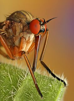 Fantastic Macro Photography of Insects - InsaneTwist