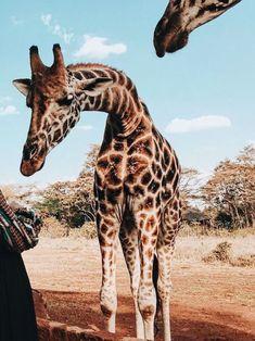 Pin by Makenzie Hodde on Animals Cute Creatures, Beautiful Creatures, Animals Beautiful, Nature Animals, Animals And Pets, Wild Animals, Cute Baby Animals, Funny Animals, Jolie Photo