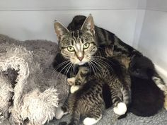 Determined mama cat is reunited with her kittens
