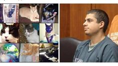 """Put Vicious Cat Killer Robert Farmer Away  """"Robert Farmer is facing multiple charges in Santa Clara County Superior Court for kidnapping, torturing and killing our pet cats and kittens in our San Jose neighborhoods."""" Click for details and please SIGN and share petition to spotlight this criminal until he is convicted and locked up."""