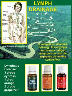 LYMPH ... Unsung Hero    The Lymph is the unsung hero of the body, as it quietly and slowly does a powerful cleansing work every minute of our lives.    Erin Poirier-https://www.facebook.com/photo.php?fbid=523394554371067=a.418642658179591.90359.417982328245624=1  #lymph #health #essentialoils #nwtyoungliving