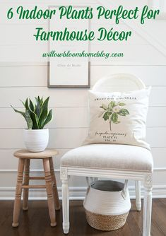 In this post, 6 indoor plants perfect for farmhouse décor, I share with you some of my favourite houseplants that compliment farmhouse décor. #houseplants #indoorplants #farmhouseplants