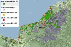 New forest map for Sarawak reveals large-scale deforestation, encroachment on indigenous territories