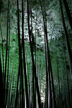 ♂ Bamboo forest in Japan The Plum festival at The Kairakuen