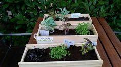 Terrarium, Plants, Home Decor, Veggie Gardens, Terrariums, Decoration Home, Room Decor, Plant, Home Interior Design