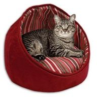 Sensational Review Cat Peeing Cat Pee Cats Kittens Cats Bralicious Painted Fabric Chair Ideas Braliciousco
