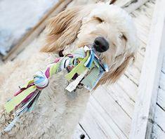 A partir de tecido você pode criar um item simples e ótimo para as horas de brincadeira com o dog!