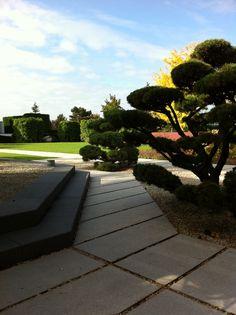 Amazing Asiatischer Garten Bonsai Kiefer in Fl che aus gro z gigen Betonlatten