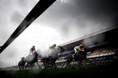 A very wet and gloomy Rosehill Gardens Racecourse in Sydney Sports Scores, Cricket Score, Sport Of Kings, Sporting Live, Fox Sports, Latest Sports News, Sydney, Around The Worlds