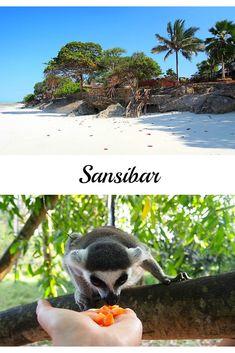 Sansibar (Tansania): 3 Highlights mit Stadt, Strand & Tieren.