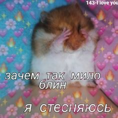 Funny Animal Memes, Funny Animal Pictures, Cat Memes, Cute Pictures, Hello Memes, Funny Postcards, Hello Kitty My Melody, Russian Memes, Cute Emoji Wallpaper