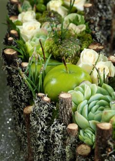 ADVENT WREATH FROM WITHERED SPRUCE BRANCHES WITH MOSS, apples, rose buds, and succulents