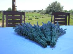 Lavender bundles from a lavender farm outside of Boulder,CO!  I had no idea!  Maybe this will be a destination this Summer!