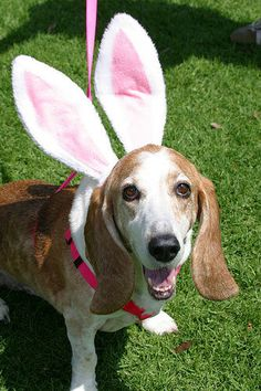 17 Dogs Whose Spirit Animal Is The Easter Bunny