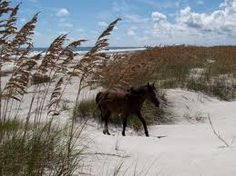 Cumberland Island, GA.  This place was so awesome--wild horses, untouched beaches, and abandoned estates.  Beautiful.