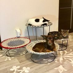 Chicken For Dogs, Cat House Diy, Pet Boarding, Funny Cute Cats, Cat Towers, Cat Room, Pet Furniture, Cat Behavior, Space Cat