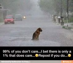 * * WE ALL CARE FOR ANIMALS.
