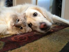 Two heads are better than one! #animals #cats #dogs