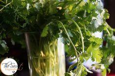 How To Keep Coriander Fresh