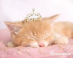 Fairytale Fantasy Photography at: http://www.pinterest.com/oddsouldesigns/fairytale-fantasy/ #cat #princess