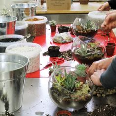 Getting dirty at this morning's #succulent #terrarium class. So much fun! workshop classes at Periwinkle Flowers, Toronto